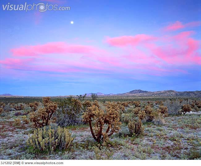 Sunset, Sonoran Desert