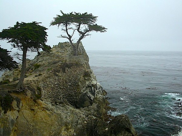 The iconic Lone Cypress is just one of the stops along the 17 Mile Drive.