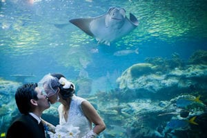 Aquarium of the Pacific - WeddingCompass.com