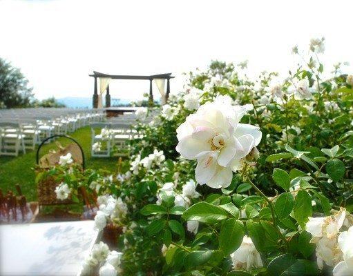 Serendipity Garden Weddings - Wedding Compass