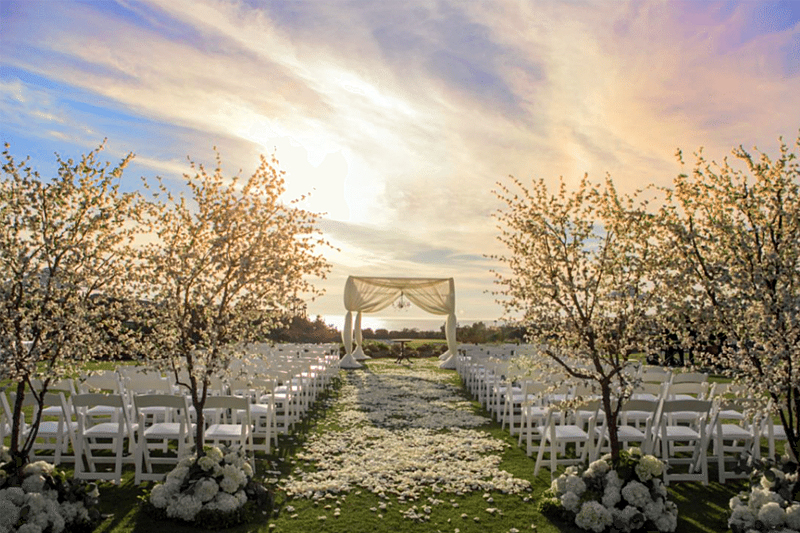 Designing With Trees for weddings - WeddingCompass.com